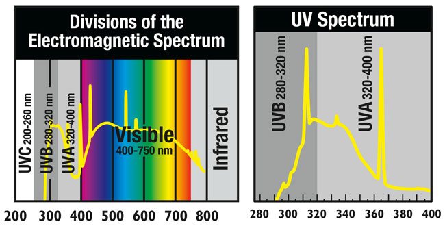 Vitamin D Uvb Experiment And Lamp Comparison Toxinless
